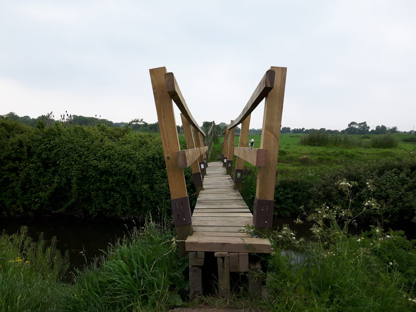 Narrow and tall-sided, wooden bridge over a river with greenery, banks and fields surrounding it.