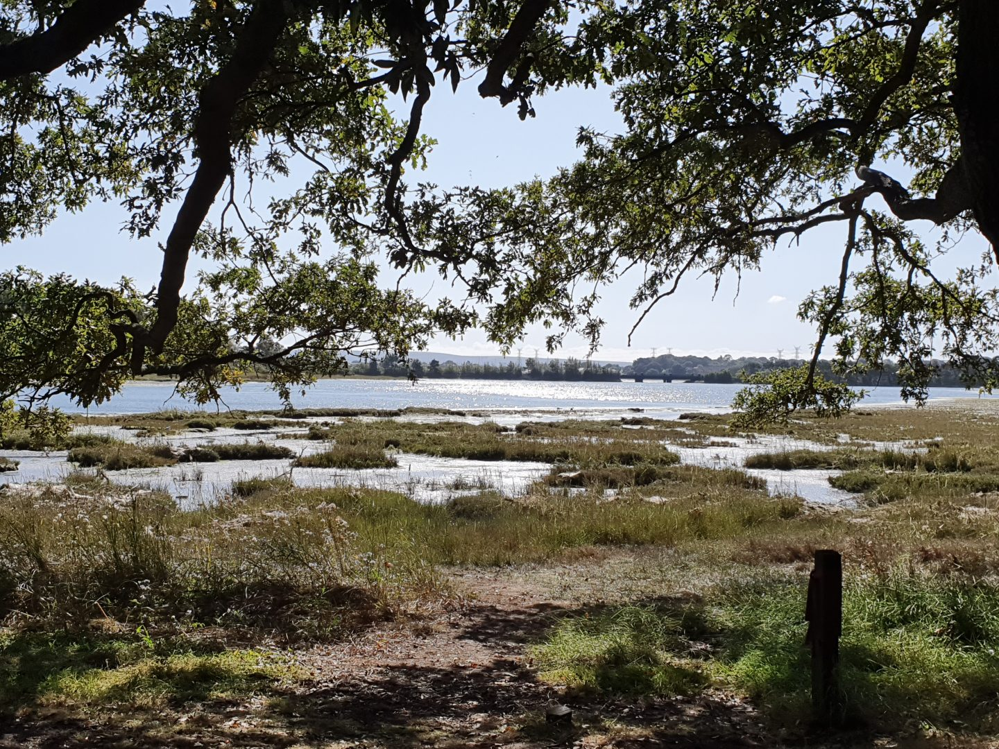 A view of a bay with trees overhanging in the foreground, marsh in the middle distance and water beyond.